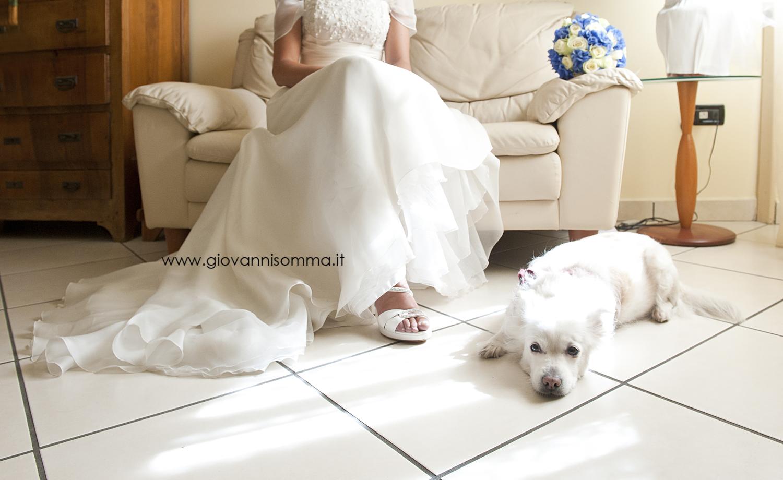 Matrimonio Uomo Cane : I nostri amici a zampe nel giorno più importante